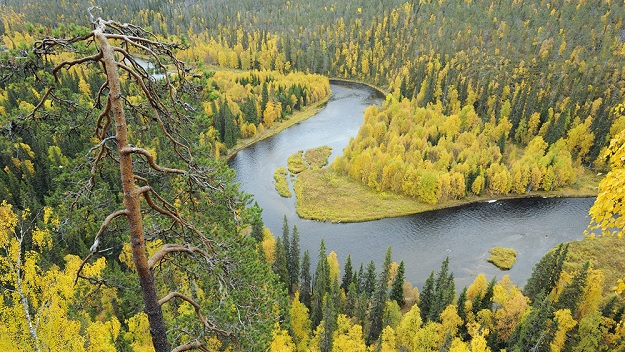 Taiga Forest in Finland