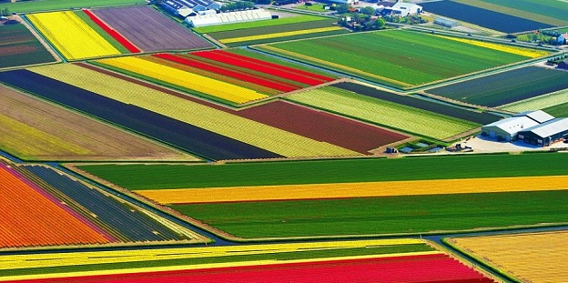 tulip-fields-of-Netherlands